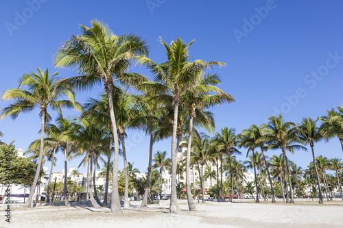 Foto op Plexiglas Caraïben Palm Trees in Miami Beach