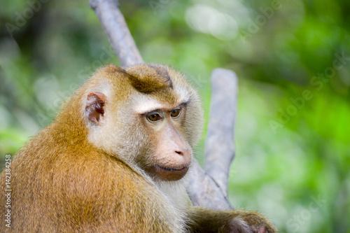 In de dag Portrait of Monkey at the park