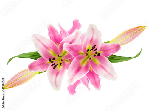 Slika na platnu Montage of pink lily flowers, buds and leaves icolated on white