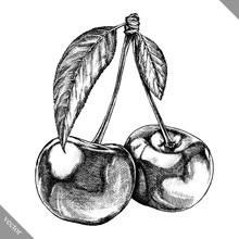 Engrave Isolated Cherry Hand Drawn Graphic Vector Illustration