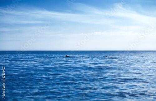 Plakat  Два дельфина в глубоком синем море и небо