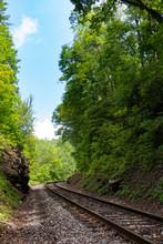 Railroad Tracks Thru The Forest
