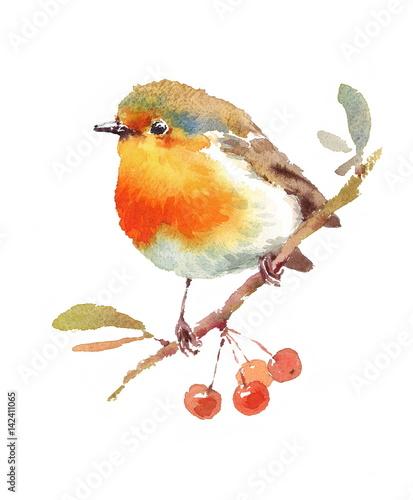 rudzik-na-galezi-z-porzeczkami-ptak-akwarela-pomaranczowy-brzuszek