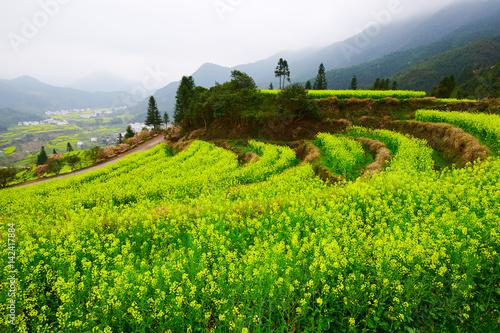 Poster Lime groen Wuyuan rape in full bloom landscape