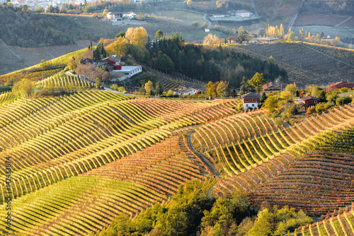 Fototapety, obrazy: Autumn in northern italy region called langhe with colorful wine