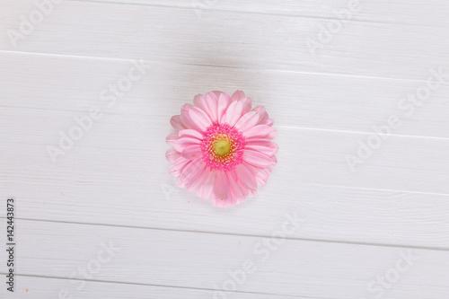 Pink gerbera flower on white wood vintage background 8 march or pink gerbera flower on white wood vintage background 8 march or valentines day love design mightylinksfo Choice Image