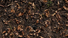 Background Of Forest Floor Wit...