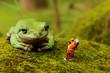 meet frog