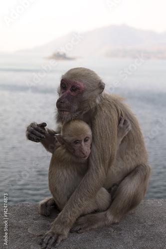 In de dag monkey and baby monkey hugging
