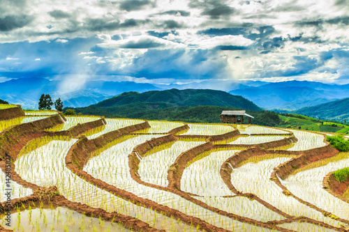 Garden Poster Rice fields Paddy or Rice fields at Pa Pong Peang in Chiangmai province of Thailand