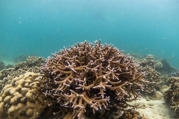 Naklejka na ściany i meble Beautiful Coral reef in Lord Loughbolough or Sea Dragon island, Myanmar