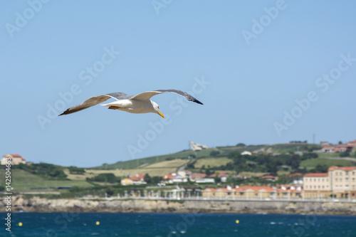 Cadres-photo bureau Turquie Bird and landscape 2