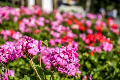 prato di fiori colorati in primavera - Buy this stock photo and ...