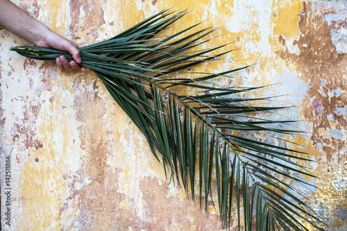 Palm branch in woman hand and beautiful old vintage cracked paint wall as a palm Wallpaper Mural