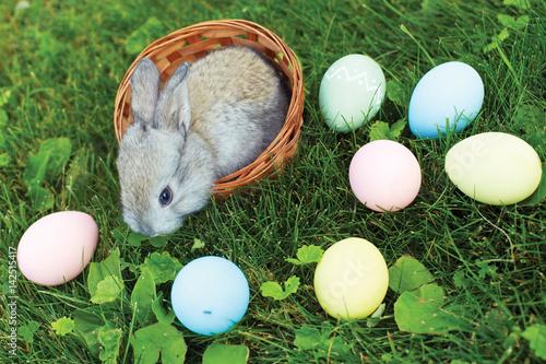 Plakat Mały Wielkanocnego królika obsiadanie w łozinowym koszu z jajkami na wiosny łące