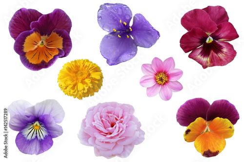 Pansies Pansy Flower Set