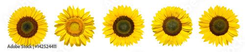 Poster Zonnebloem Sonnenblumen als Panorama Hintergrund