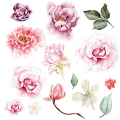 FototapetaWatercolor set with peony, roses and magnolia flowers. Illustration
