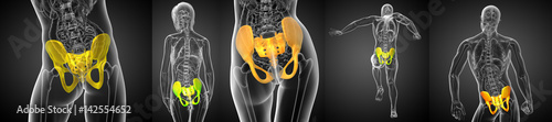 Fotografie, Obraz  3D rendering medical illustration of the pelvis bone