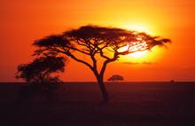 Sunrise Over The Plains Of The Serengeti