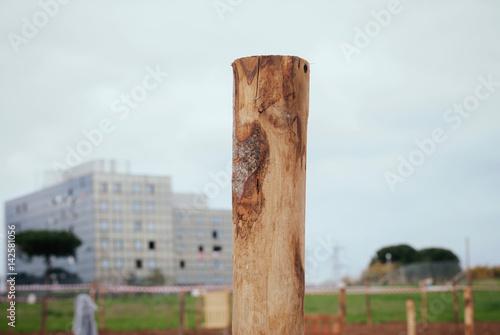 Fotografia, Obraz  Palo di legno
