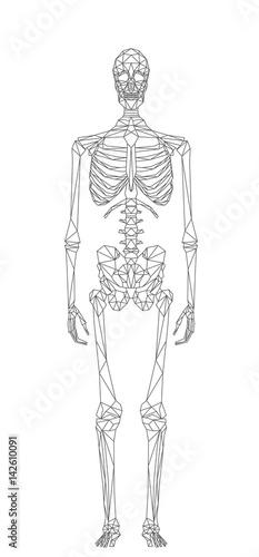 Fotografie, Obraz  Scheletro umano, la struttura ossea del corpo, illustrazione vettoriale