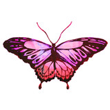 Fototapeta Motyle - pink butterfly,watercolor,isolated on a white