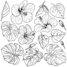 Tropical Flowers And Palm Leaves, Hand Drawn Monochrome Botanical Set Isolated On White Background. Vintage Vector Illustration.