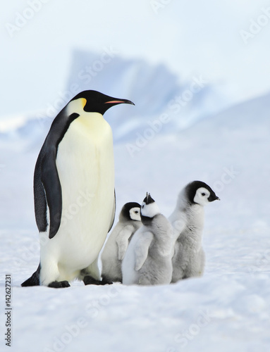 Tuinposter Pinguin Emperor Penguins with chick