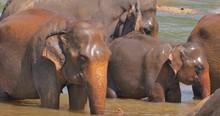 Beautiful Wildlife Scene Of Sm...