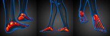 3d Rendering Illustration Of The Red Foot Bone X-ray Collection