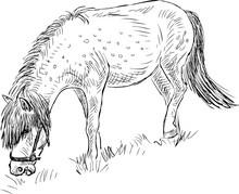 Sketch Of A Grazing Pony