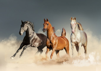 three horses runs free in desert