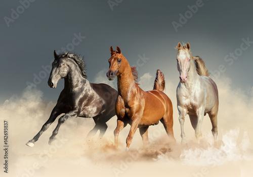 Wall Murals Photo of the day three horses runs free in desert