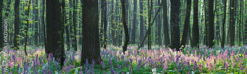 Cadres-photo bureau Olive Forest landscape with spring flowers