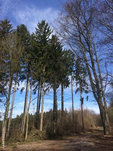 Fototapeta Idylle im Wald obraz na płótnie