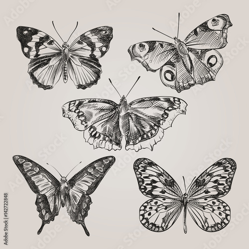 Foto op Aluminium Vlinders in Grunge Set of hand drawn butterflies isolated on white background. Butterfly in sketch style. Retro hand-drawn vector illustration.