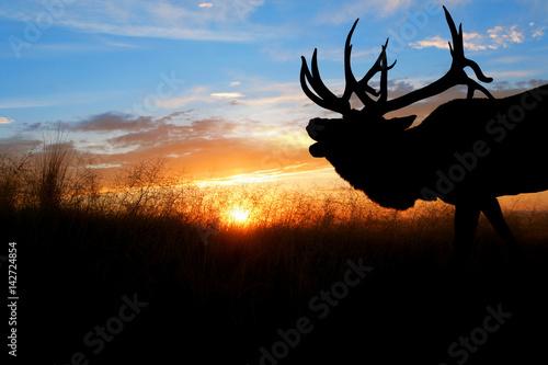 Poster Chasse Bull Elk