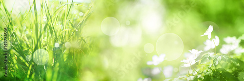 Poster Spring Bright green spring panorama background