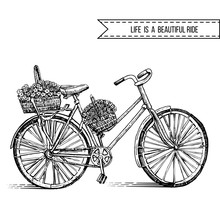 Bicycle Hand Drawn Vector Sketch, Ink Illustration Old Bike With Floral Basket Isolated On White Background, Vintage Decorative Style For Design Invitation, Greeting Cards, Advertising, Fashion Print
