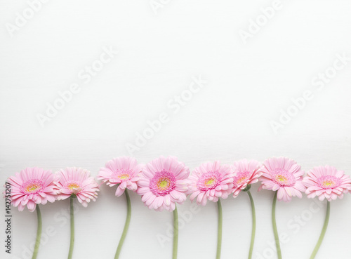 Wall Murals Gerbera Row of pink gerberas