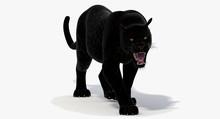 Panther 3D