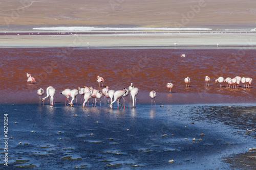 Garden Poster Flamingo Flamingos at Laguna Colorada