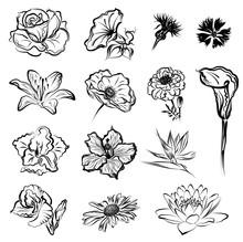 Flowers (Rose, Morning Glory, Cornflowers, Lily, Poppy, Marigold, Calla, Gladiolus, Hibiscus, Strelitzia, Daisy, Lotus). Set Of Hand Drawn Stylized Monochrome Vector Brush Sketches.