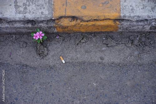 Photo  pink flower on street. Flower grow on asphalt.