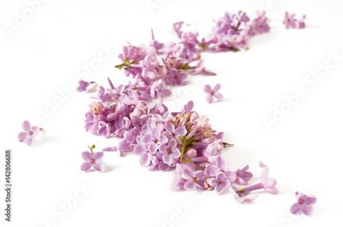 Foto op Plexiglas Magnolia Lilac flowers abstract composition isolated on white background
