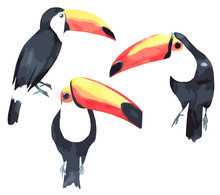 Toucan Watercolor Set. Tropica...