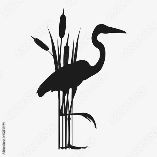 Fotografija heron vector silhouette