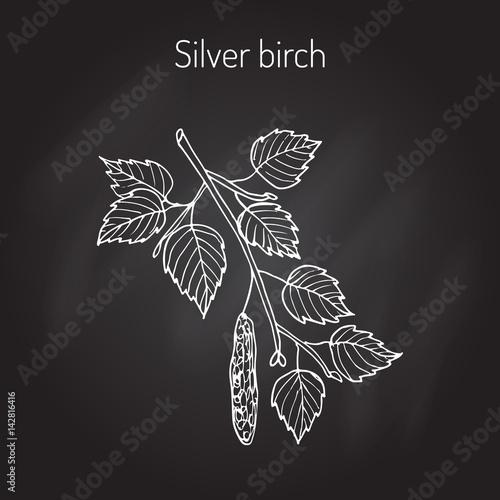 Fotografie, Obraz Silver birch branch with leaves