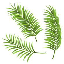Realistic Palm Tree Leaf Set Illustration, Isolated On White. For Exotic And Summer Frame, Background Or Design.
